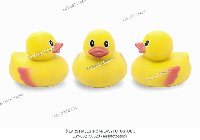 Studio shot of three yellow rubber ducks