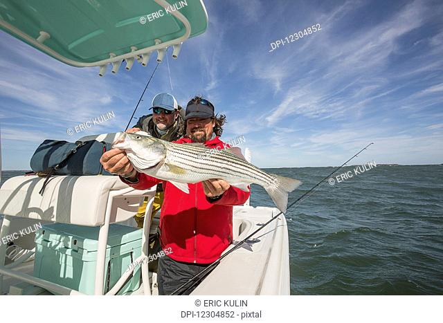 A fisherman on a boat holds a large fresh striped bass caught off the Atlantic coast; Cape Cod, Massachusetts, United States of America
