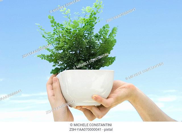 Hands holding up maidenhair fern in pot