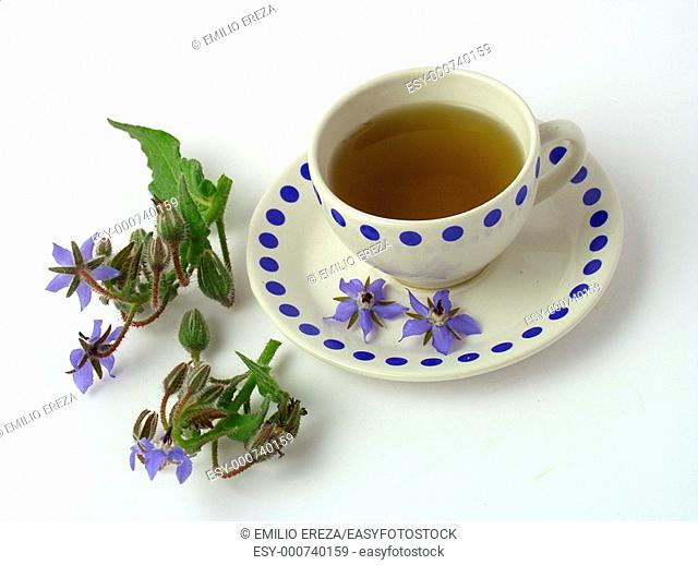Borage infusion Borago officinalis