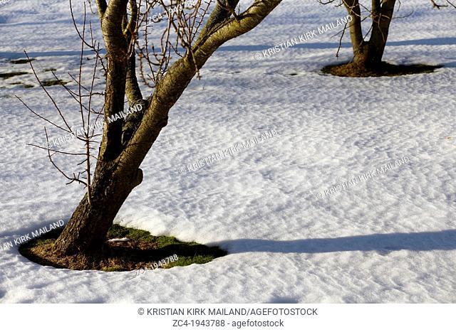 Melting snow around garden trees. Springtime. Sweden