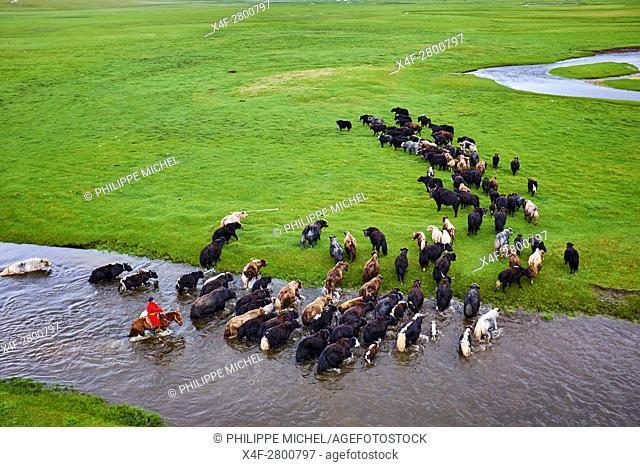Mongolia, Arkhangai province, Mongolian horserider with a herd of yaks