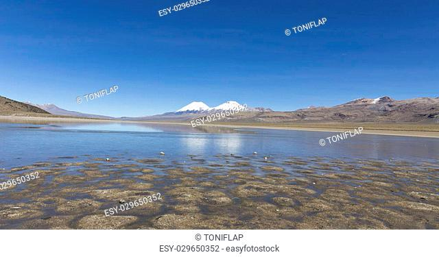The snowcapped volcanoes Parinacota and Pomerane. Sajama National Park, on the border between Bolivia and Chile over 4500 meters. Range of the Andes