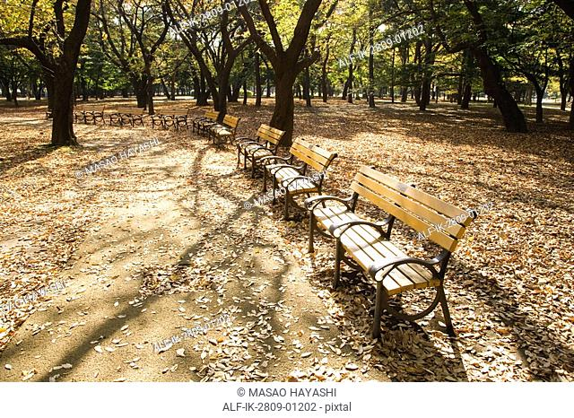 Empty Bench at Yoyogi Park,Shibuya-Ku,Tokyo,Japan