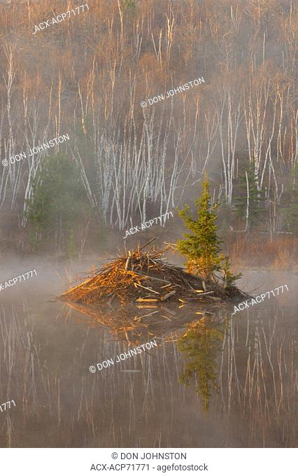 Beaver pond in morning mists, Greater Sudbury, Ontario, Canada