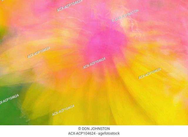 Macro light painting with garden flowers, Greater Sudbury, Ontario, Canada