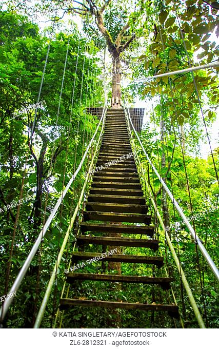 Ladder and jungle landscape. Isla Bastimentos, Bocas del toro, Panama
