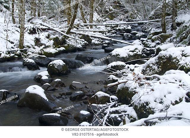 Tumble Creek, Willamette National Forest, Oregon