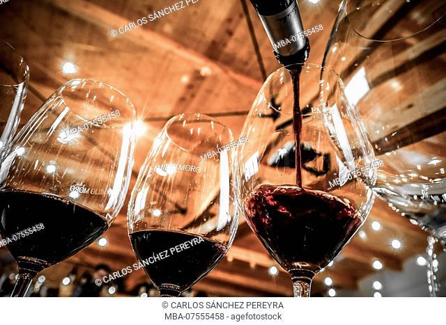 Wine tasting in Emilio Moro wine cellars of the denomination Ribera del Duero in Valladolid Spain Europe
