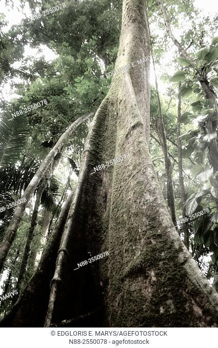 Jungle scene, Venezuela