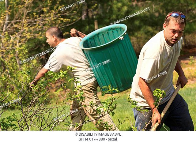 Landscapers raking and removing weeds
