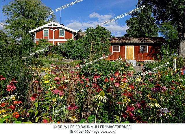 Herbal garden with coneflowers in the open-air museum Skansen, Djugarden, Stockholm, Sweden
