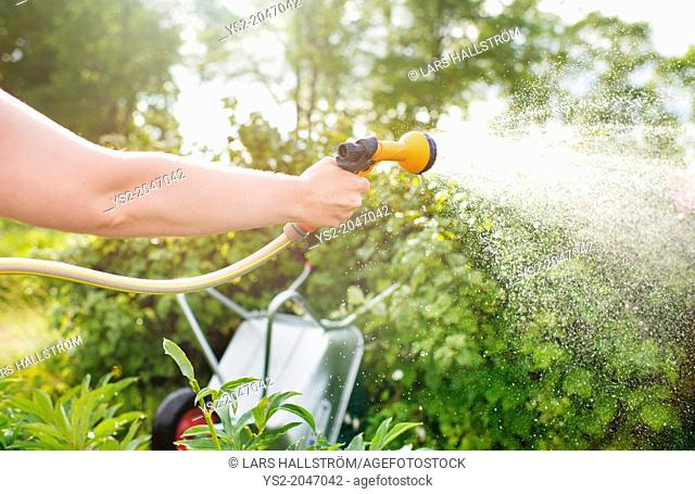 Woman watering plants with garden hose and hand held sprinkler