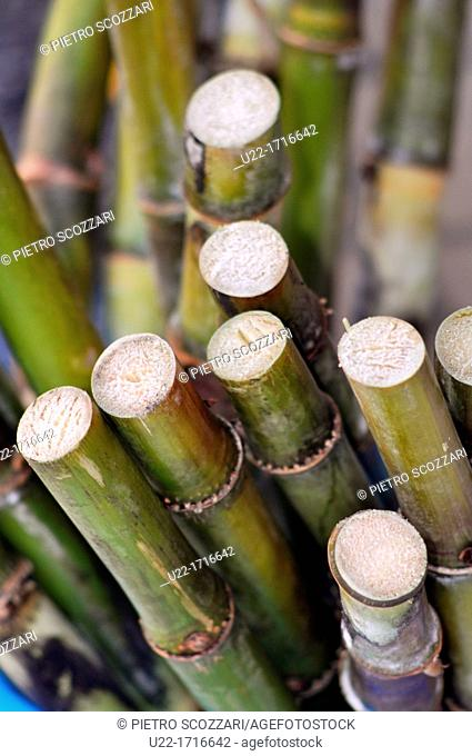 Okinawa Japan: sugarcane
