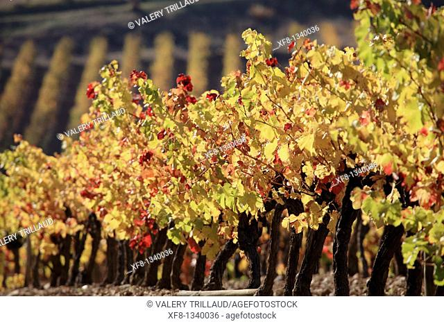 Vineyards of the Luberon Vaucluse 84 PACA France