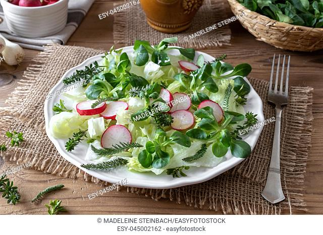 Spring salad with wild edible plants such as chickweed, bedstraw and yarrow