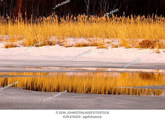 Remant snow and marsh grasses reflected in open water of Robinson Creek. Sudbury. Ontario, Canada