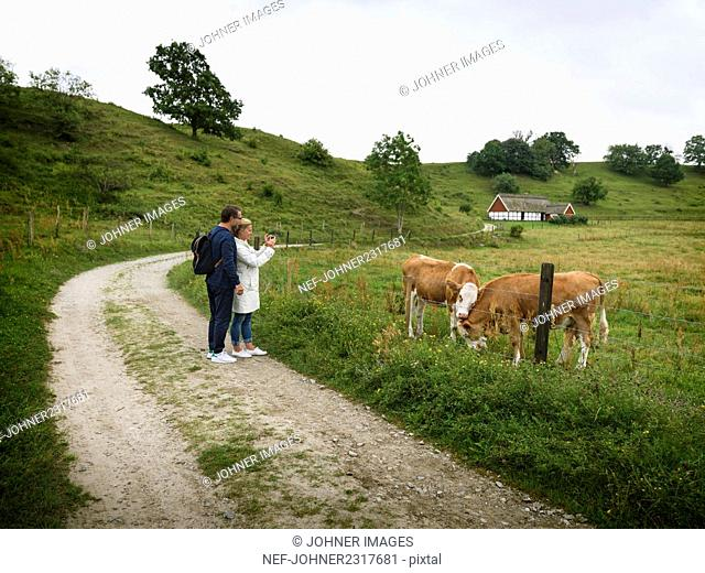 Couple looking at cows on pasture
