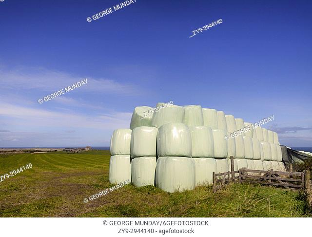 Plastic wrapped bales of straw on the North Yorkshire and Cleveland Heritage Coast, England