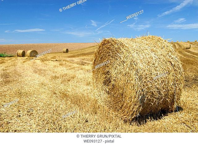 Hay bales stocked in field  Lorraine region, France