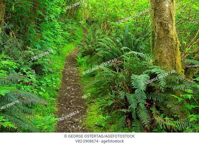 Amanda's Trail, Cape Perpetua Scenic Area, Siuslaw National Forest, Oregon