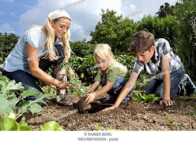 Germany, Bavaria, Altenthann, Woman and children gardening together in garden