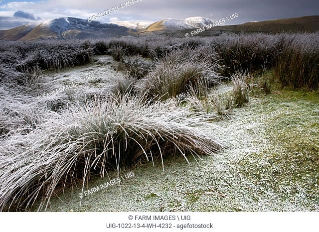 Frost covered rushes and Cautley Crag - part of the Howgill Fells in the background. Cumbria - England. (Photo by: Wayne Hutchinson/Farm Images/UIG)