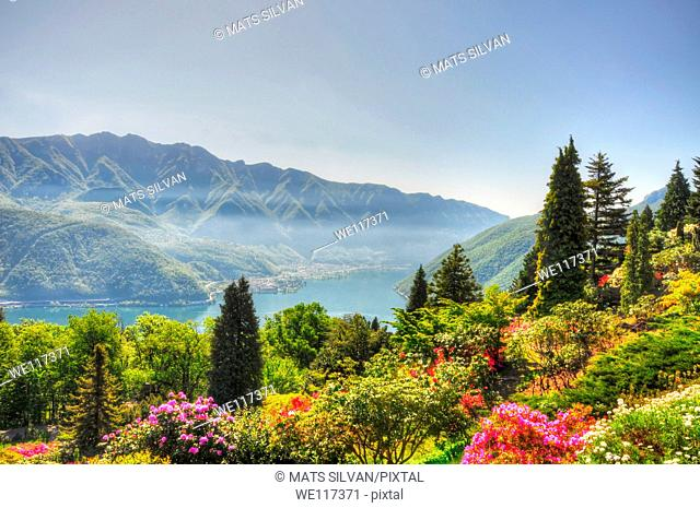 Flowers and trees with mountain and a lake
