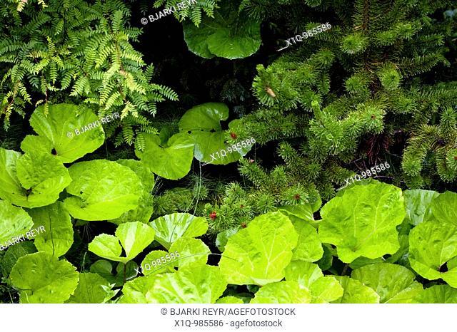 Plants, Iceland