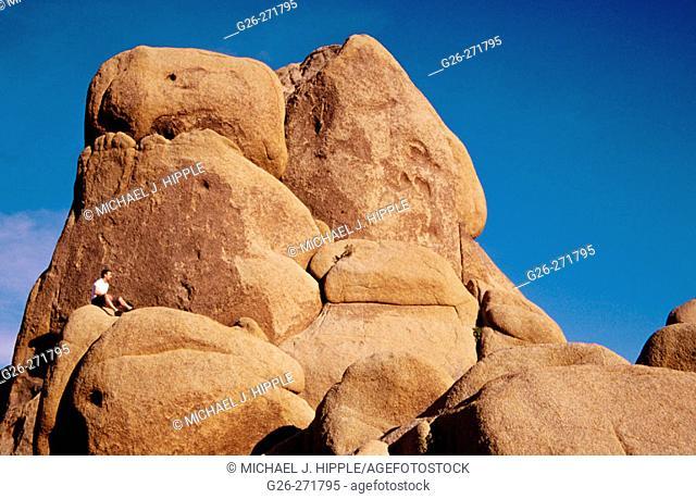 Jumbo Rocks Area. Joshua Tree National Park. California. USA