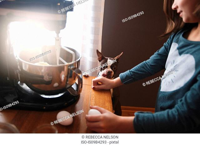 Dog watching as young girl uses food mixer