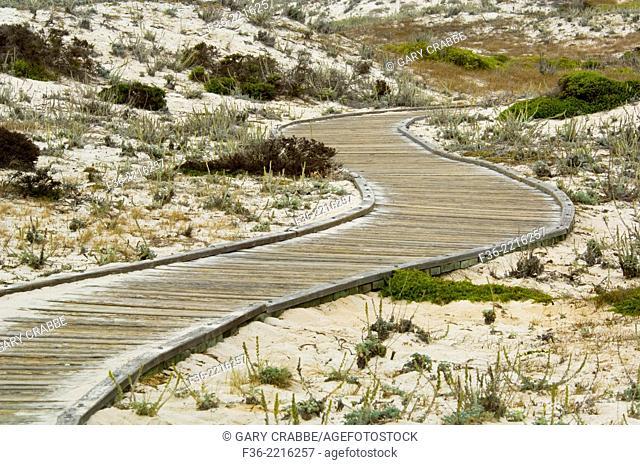 Boardwalk pathway through sand dunes at Asilomar State Beach, Pacific Grove, Monterey Peninsula, California