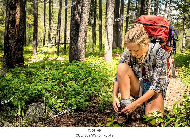 Female teenage hiker tying hiking boot laces in forest, Red Lodge, Montana, USA