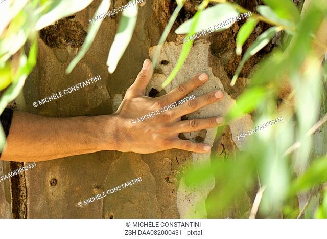 Man's hand touching tree bark, cropped