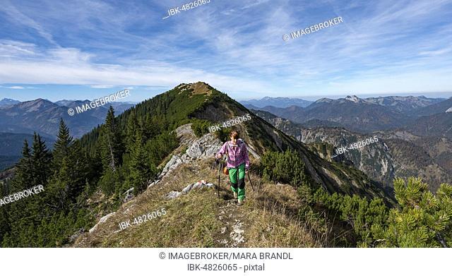 Hiker crossing the Blauberge mountains, from Predigtstuhl over Blaubergschneid, Blaubergkopf and Karschneid to Halserspitz, Wildbad Kreuth, Upper Bavaria