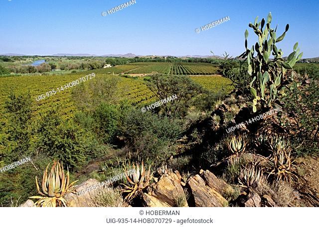 Cape Wine Route, Northern Cape