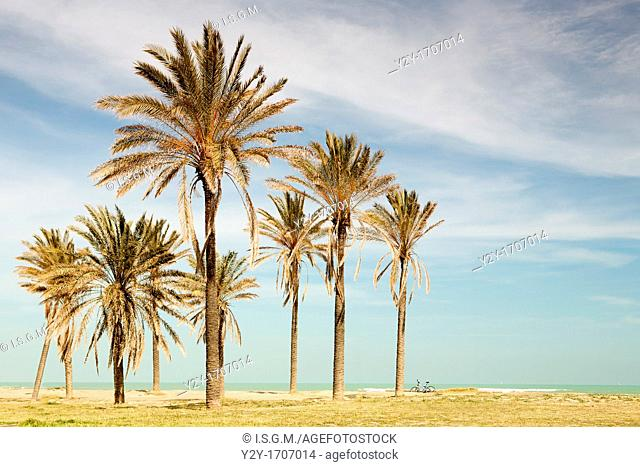 Palms and bicycle at the beach, Valencia, Spain