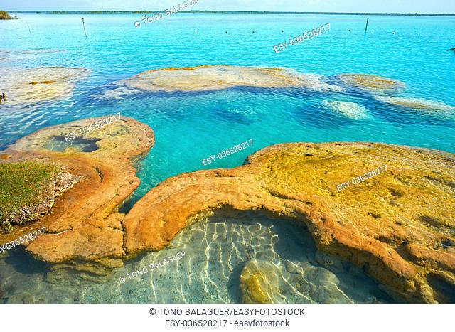 Estromatolitos Stromatolites in Bacalar Lagoon of Mexico in Quintana Roo