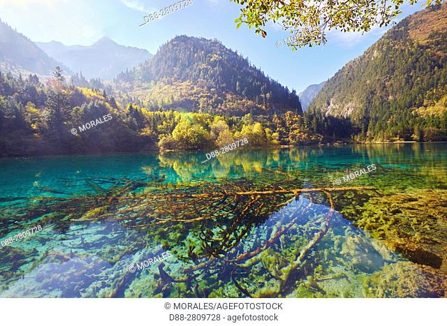 Asia, China, Sichuan province, UNESCO World Heritage Site, Jiuzhaigou National Park, Colorful lake