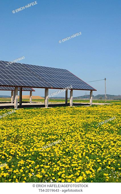 Solar power plant on a yellow dandelion meadow