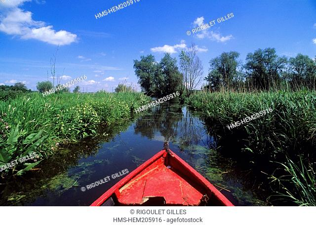 France, Pas de Calais, Audomarais marsh, the Pools of Romelaëre reserve, travelling on the watergangs by traditional boat