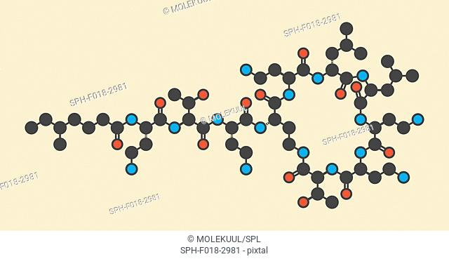 Colistin antibiotic drug molecule. Stylized skeletal formula (chemical structure): Atoms are shown as color-coded circles: hydrogen (hidden), carbon (grey)