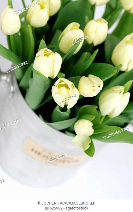 DEU, Federal Republic of Germany : Tulips, in a cooler, for decoration
