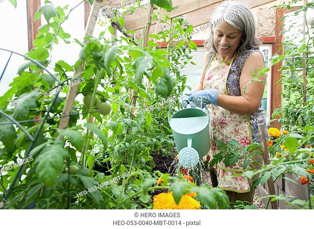 senior woman watering plants in green house