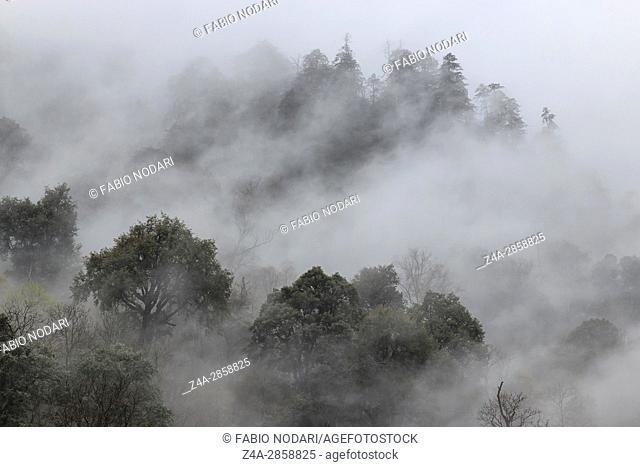 Remote foret in souther China home to the Yunnan Black Snub-Nosed Monkey (Rhinopithecus Bieti)