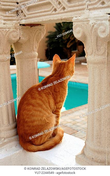 Cat on hotel terrace in Nefta town, Tunisia