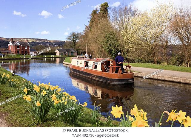 Froncysyllte, Wrexham, North Wales, UK, Europe  Narrowboat on the Llangollen canal with daffodils in spring