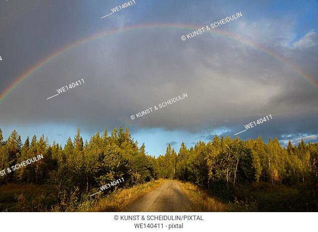 A rainbow glows over a forest lane on an autumn afternoon in southern Lapland