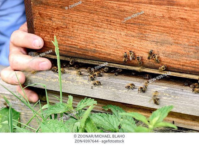 Blick auf das Einflugloch eines Bienenstocks