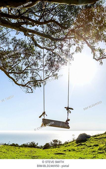 Tree swing near ocean